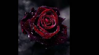 Nothing But the Blood  -  Natalie Grant & Steve Grant