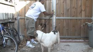 Dog Training & Canine Health : Training A Dog To Stay Inside The Fence