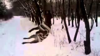 Смешной пес и дерево