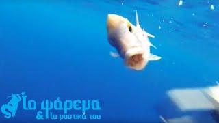 Ψάρεμα από το σκάφος Catch & Release