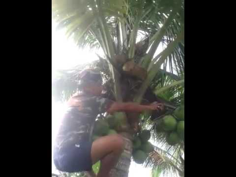 Lion laugh because of a man with coconut tree