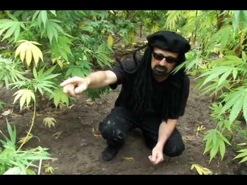 Jorge's Guide to Guerilla Gardens