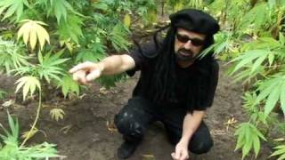 Jorge's Guide to Guerilla Gardens