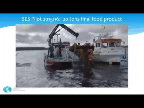 Maribe Project - Wave Dragon and Seaweed energy Presentation