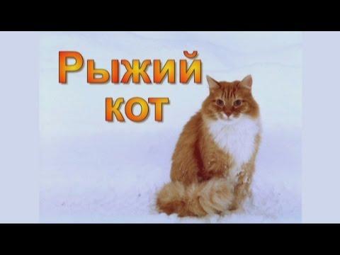 коты рыжие обои