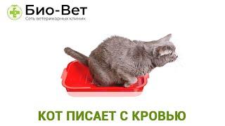 Кот писает с кровью. Ветеринарная клиника Био-Вет.