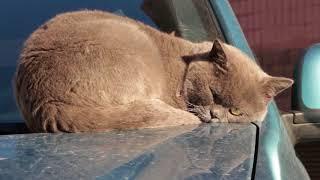 Мечтающий Кот | Солнце  славян | Тепло | жива славянская система в уфе