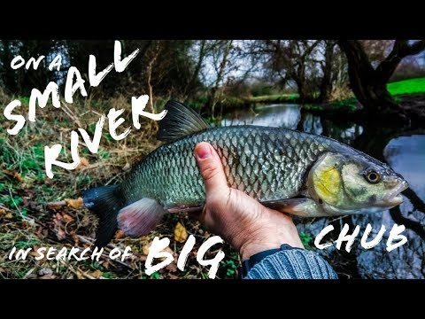 Fishing A Small Kentish River For Big Chub.