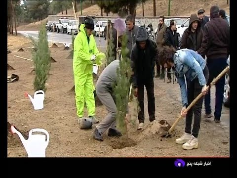 Iran Planting 50,000 Trees as phase one, Chitgar forest park, Tehran كاشت درخت بوستان جنگلي چيتگر