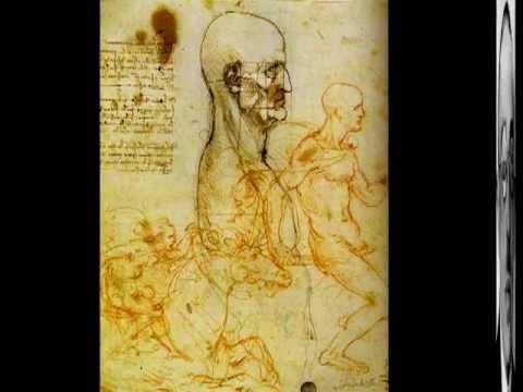El cuerpo humano en  el arte  Leonardo Da Vinci   Alexander Rodchenko   Ron Mueck