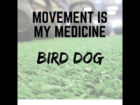 bird-dog---eldersburg-chiropractor-will-teach-you-how!