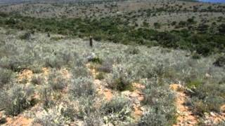 1.0 Bedroom Farms For Sale in Alicedale, Alicedale, South Africa for ZAR R 2 100 000