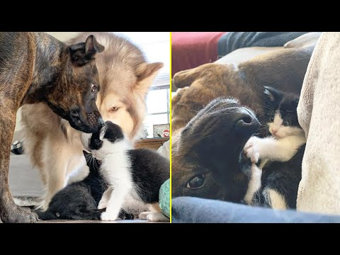 Rescue Little Kitten Are Super Charming Who Enjoys To Play With Pet Dogs And So Active - NewsBurrow thumbnail