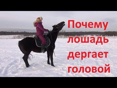 Почему лошадь дёргает головой