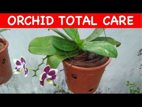 Complete care of your orchid plant (with english subtitle)