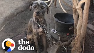 Watch This Woman Convince Guy To Give Her His Chained-Up Dog And Puppies | The Dodo Faith = Restored