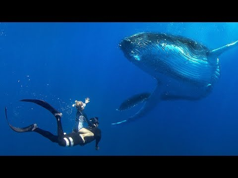 Little Kids Swimming With BIG WHALES!! /// Ultimate Tonga Bucket List Adventure!!