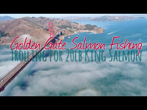 Golden Gate King Salmon Fishing | Huge Chinook Salmon Landed Trolling // EZ Limit