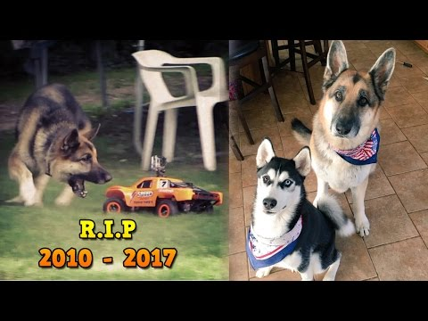 Thumbnail: Tribute to Zeus Atwood - Roman Atwood Dog - RIP 2010 - 2017