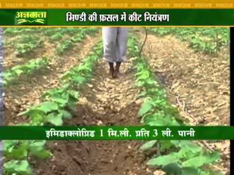 Know About Pest Control In Lady Finger Crop