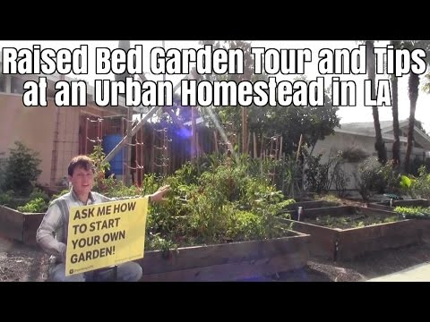 Raised Bed Garden Tour and Tips at an Urban Homestead in LA
