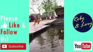 Dog Jump Over The Fountain! Pets Funny Video Meme