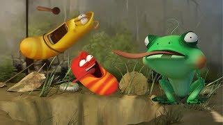 LARVA - TOAD IN THE HOLE | Cartoon Movie | Cartoons For Children | Larva Cartoon | LARVA Official