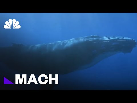 Watch: Can Drones Save Whales Trapped In Fishing Gear?