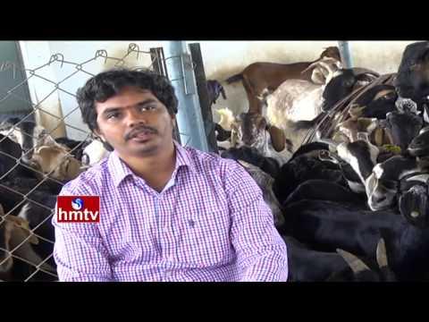 Success Story Of a Sri Kumar Turns as Goat Farmer | Hyderabad | Nela Talli | HMTV