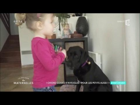 Des Chiens Guides D'aveugles Pour Les Enfants - La Maison Des Maternelles
