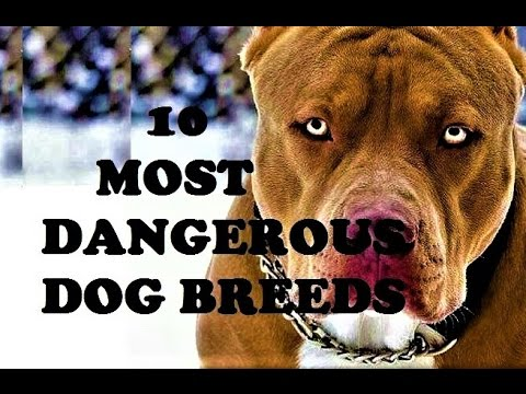 LIST OF - 10 MOST DANGEROUS DOG BREEDS