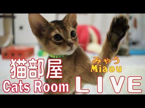 キャットウォーク【みゃう】 Catsroom catwalk Live【Cats room Miaou】