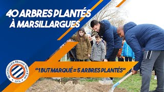 VIDEO: 40 ARBRES  plantés à Marsillargues !