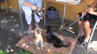 Episode #43 Training Tip Outside Dining With Your Dog   Etiquette & Manners