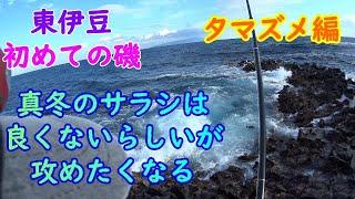 【東伊豆】富戸エリアの初めての磯に挑戦!(夕マズメ編)【2020年2月】