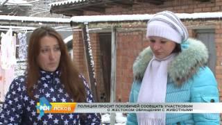 РЕН Новости Псков 16.01.2017 # Жестокое обращение с животными
