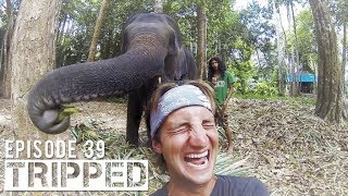 THAILAND VLOG-  Baby Elephant Wash and Elephant Jungle Trek in Krabi Huay Toh Waterfall
