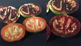 圧倒的ルックスだが中身も凄い。カットすると2分以内に出血する新種のトマトが発見される(オーストラリア)