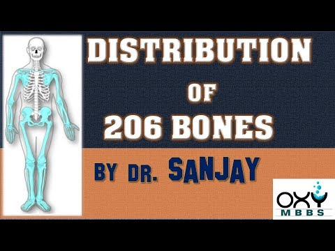 DISTRIBUTION OF 206 BONES IN OUR BODY  For regular MBBS students & PG aspirants