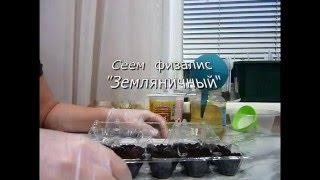 Физалис земляничный. Посев семян на рассаду физалиса. Сеем 29.03.16