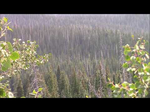 A New Bigfoot World?  Large X FROM A DISTANCE