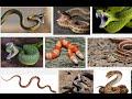 snake, dream of snake, dream about snake, dream snake, meaning of snake dream
