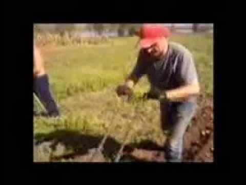 Ручная картофелекопалка - YouTube