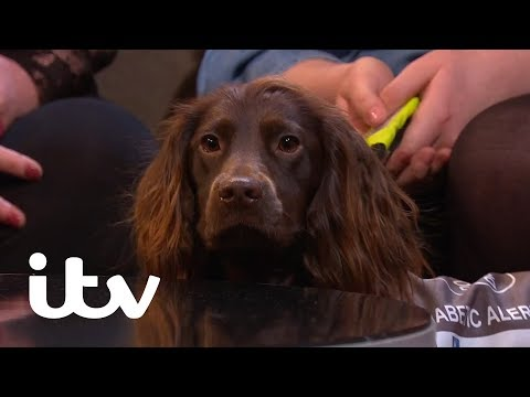 This Time Next Year | Millie's Dream of Independence Rests on Her Dog | ITV