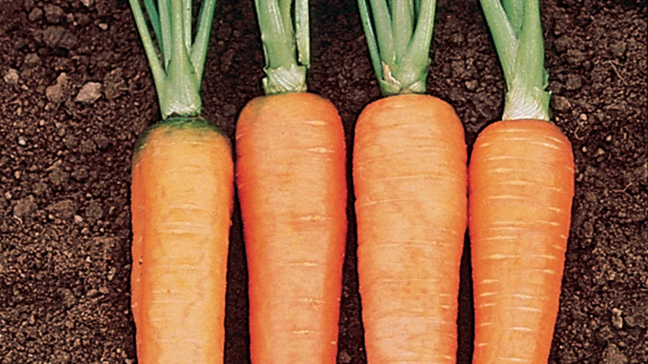 Growing Carrots In A Container You