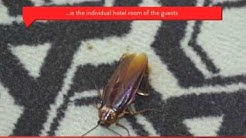 Pest Control for Hotels and B&B's