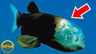 10-อันดับ-สิ่งมีชีวิตสุดพิศวงใต้ทะเลลึกบนโลกใบนี้-ไม่น่าเชื่อ