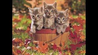 Песенка про Осень, песенки для детей, детские песенки