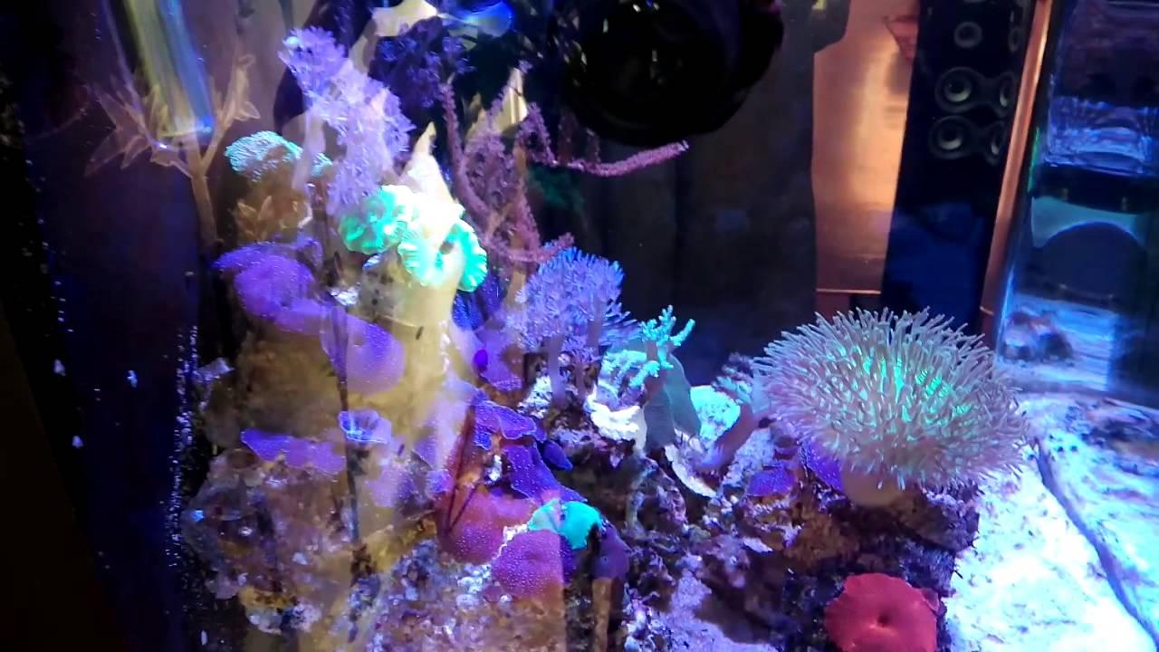 Aquarium sera 130 reef youtube for Sera aquarium