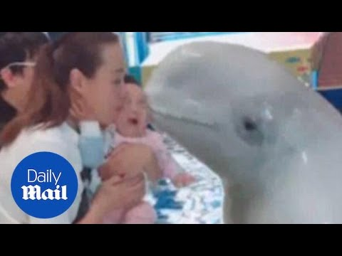 Baby bursts into tears after being kissed by beluga whale - Daily Mail